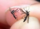L'Alacantí usará drones contra el mosquito tigre