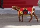 La cabra de la Legión se llama 'Pablo' y desfila sin atadura