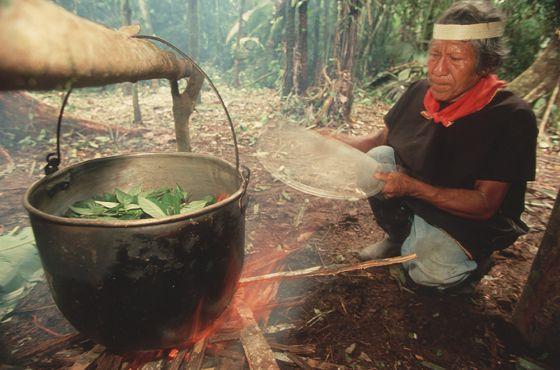 Un chamán hierve hojas para preparar Ayahuasca