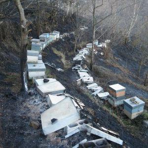 Colmenas quemadas en el incendio de El Vallín, en Asturias.