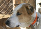 Seis veterinarios y 26 cazadores detenidos por mutilar a perros