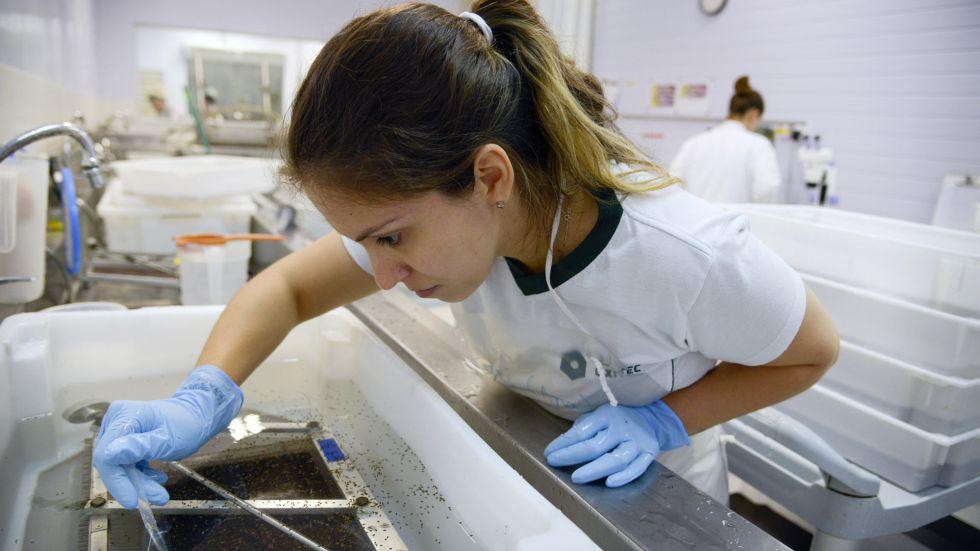 Una especialista analiza el virus en un laboratorio de Campinas (Brasil).