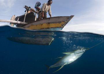 Prisión para el gran 'pirata' gallego de la pesca ilegal
