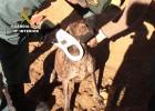 Tres detenidos en Toledo por traficar y maltratar a perros de caza