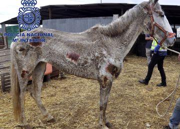 Detenidos los dueños de 22 caballos y cuatro perros semiabandonados