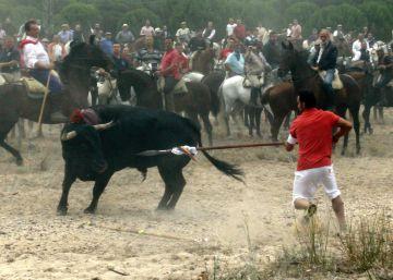 La Junta de Castilla y León prohíbe matar al Toro de la Vega