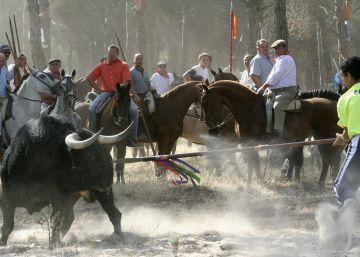 Tordesillas recurrirá al tribunal la prohibición del Toro de la Vega