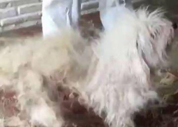 Detenida por maltrato animal una pareja con 39 gatos y 13 perros