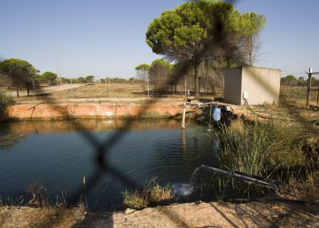 Madrid blames climate change for Doñana's decline