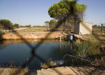 El Gobierno esgrime el cambio climático para evitar la sanción por el deterioro de Doñana