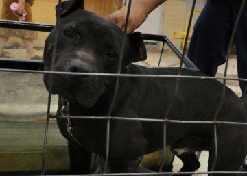 Muere una mujer en Ciudad Real tras un supuesto ataque de un pitbull