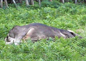 Muere embestido por un toro cuando paseaba por un monte de Orio