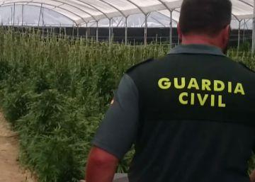 Tres detenidos por cultivar 20.000 plantas de marihuana en Sevilla