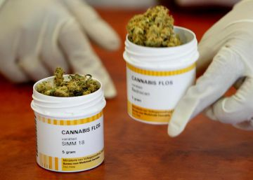 El Ejército que cultiva cannabis y otros ejemplos de su uso medicinal