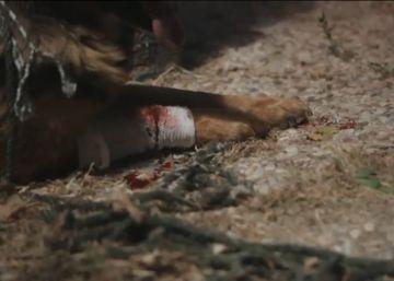 Condenado un veterinario por tirar a su perro herido