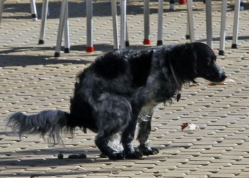 War on waste: Malaga introduces DNA profiling for dogs