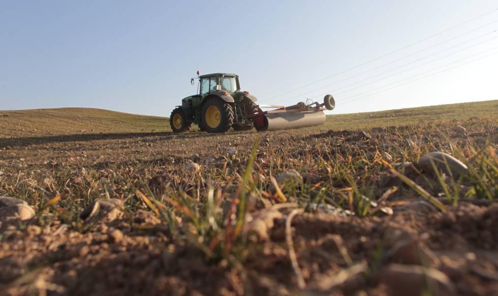 Un tractor trabaja en un campo afectado por la sequía, en Morata de Tajuña (Madrid).