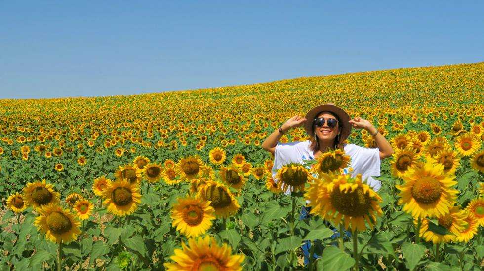 A Japanese tourist in the sunflower fields of Carmona, Sevilla.
