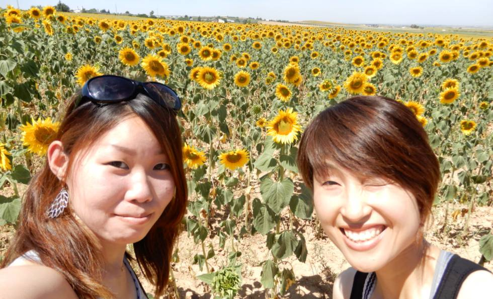 Mai Muraki and a friend amid the sunflowers of Carmona.