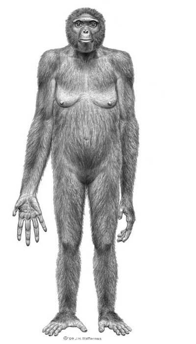 Representación del 'Ardipithecus ramidus'
