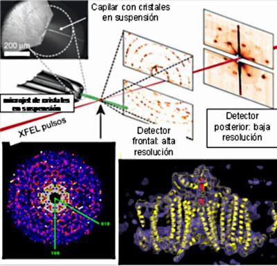 Un dispositivo para el estudio de nanocristales del complejo proteínico PS-I. En este experimento el detector recoge datos de difracción (puntos) que luego son procesados, integrados y condensados. Un plano (panel izquierdo) de los datos obtenidos a partir de aproximadamente 15.000 patrones obtenidos cuando los fotones del XFEL encuentran un nanocristal en su camino . A la derecha, reconstrucción por medio de la densidad electrónica (contornos azules) de la estructura (cinta amarilla) de PS-I.