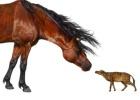 Los caballos primitivos encogieron por el calor