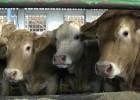 Nuevo caso de 'vaca loca' en Estados Unidos