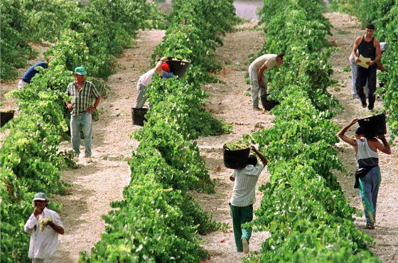 España recibe unos 5.160 millones de ayuda a la agricultura.  Jaro Muñoz