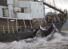 Corea planea volver a cazar ballenas 26 años después