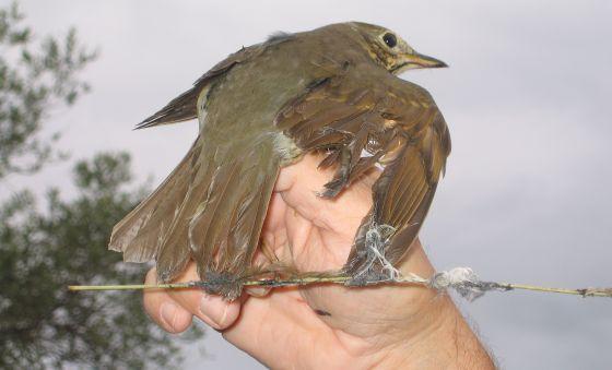 Vuelo libre para las aves migratorias