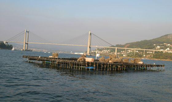 Batea en ría de Vigo (Pontevedra) con el puente de Rande al fondo.