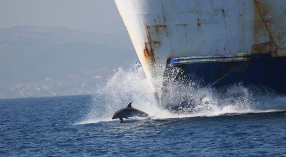 Delfín saltando delante de un buque en el Estrecho de Gibraltar.