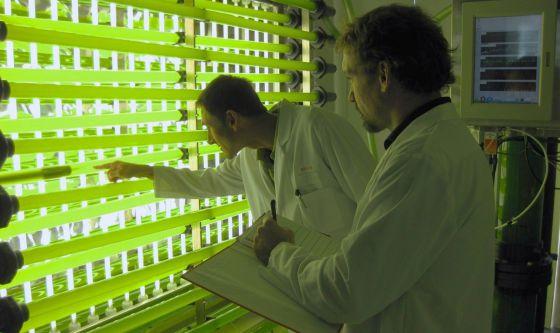 Los proyectos intentan convertir las potencialidades de algas y microalgas en procesos industriales.