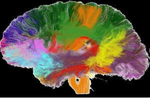 Lo último en cerebros de silicio