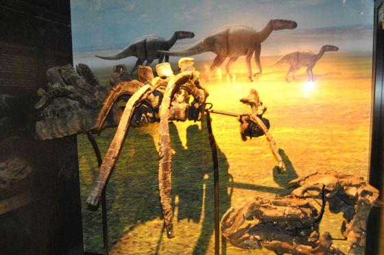 Cráneo y otros fósiles del nuevo dinosaurio encontrado en la mina de Ariño, expuestos en Dinópolis (Teruel).