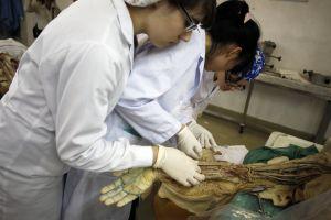 Estudiantes de medicina analizan un cadáver durante unas clases.