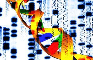 La genética sola no explica la homosexualidad.
