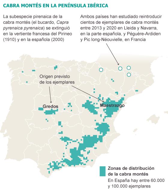 España se desmarca del plan de suelta de cabra montés en el Pirineo