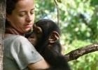 La mafia de los chimpancés robados