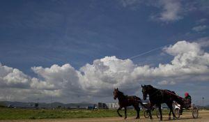 Las carreras de trotones son una tradición en Baleares.