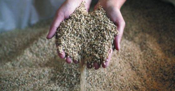 Unas manos sujetan un puñado de arroz.