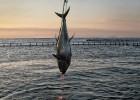 El Parlamento Europeo impulsa una revolución en la pesca