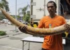Tailandia prohíbe el comercio de marfil