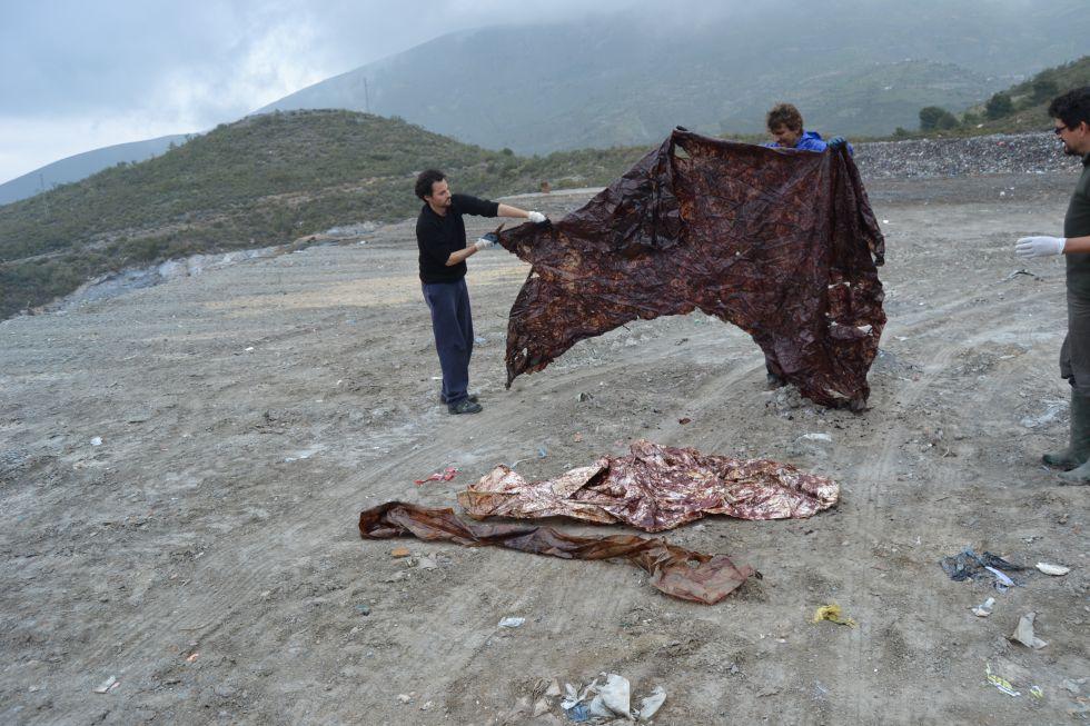 Los investigadores extienden los plásticos que engulló el cetáceo.