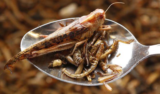La alta cocina no encuentra hueco para los insectos, es un bocado que los occidentales no acaban de tragar.