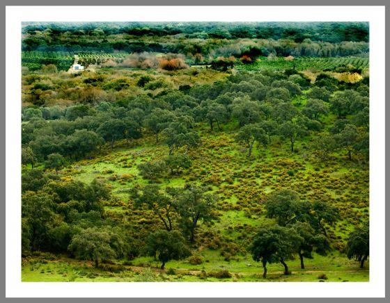 Uno de los parajes de la finca de La Almoraima.