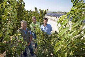 Pascual Hortelano, Santiago Martínez y Manuel Herrera, en el parque solar Las Ramblas de Cieza (Murcia).