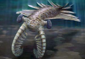Un 'Anomalocaris', el primer gran depredador marino.