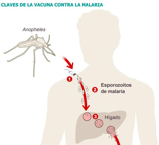 Primera vacuna antimalaria eficaz