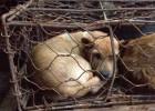 Cae una red en China que traficaba con carne de perros y gatos